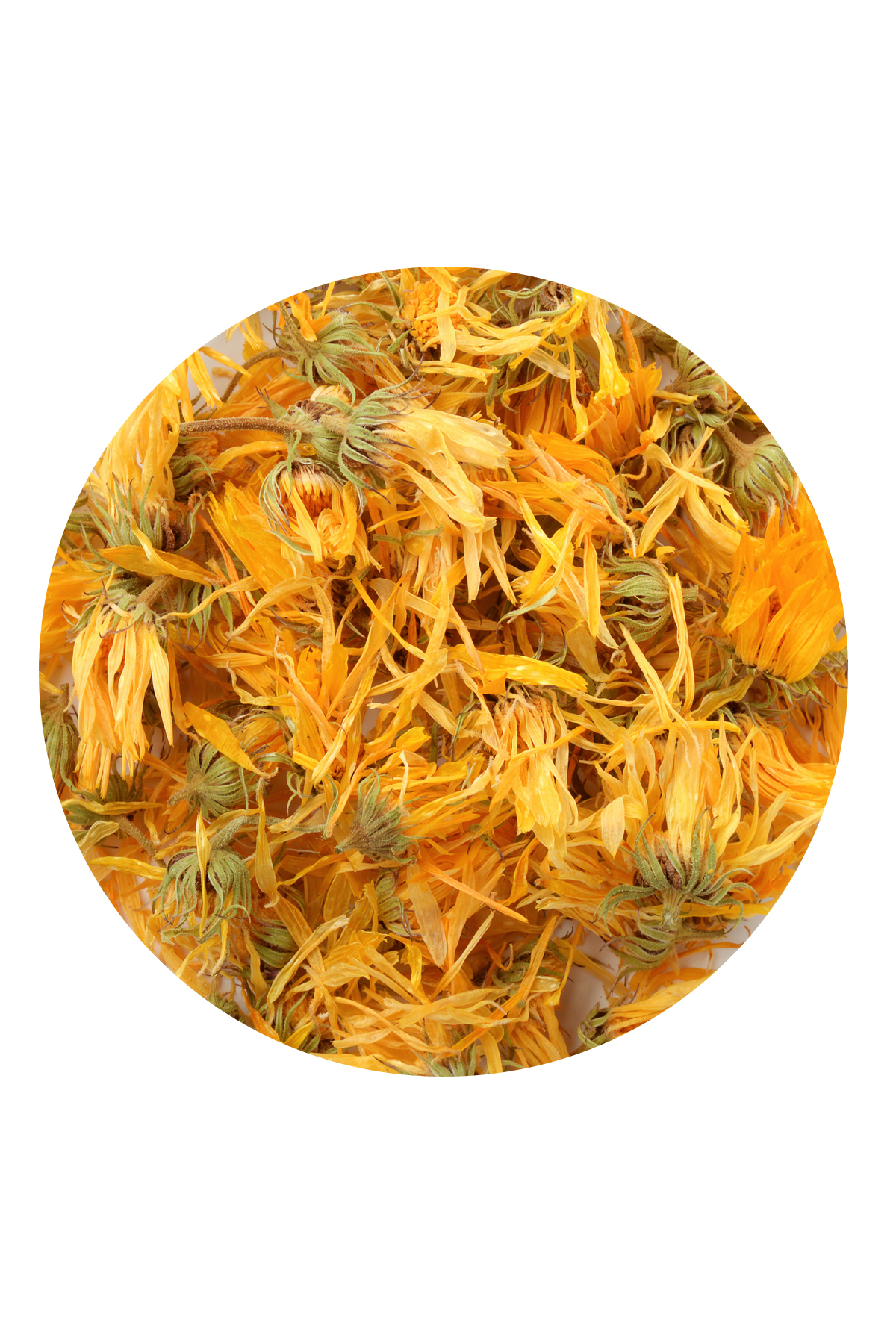 КАЛЕНДУЛА - CALENDULA OFFICINALIS - ЦВЕТЫ фото